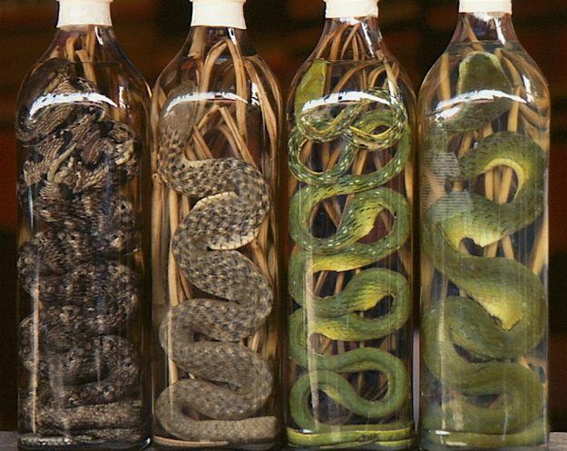 napoje-likier-z-węża
